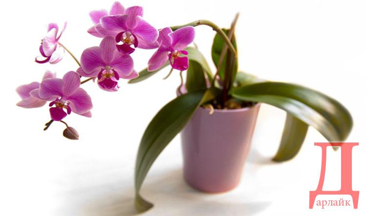 Что подарить маме на Новый год - цветы