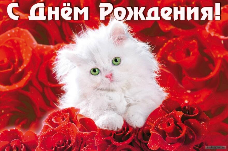 Поздравительная открытка с кошечкой с днём рождения женщине