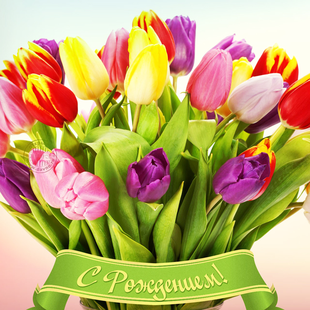 Яркая открытка женщине с днём рождения с тюльпанами