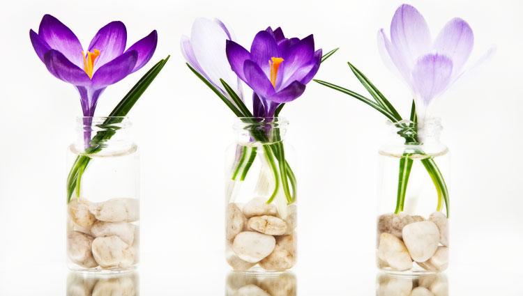 Цветы в горшочке на 8 марта