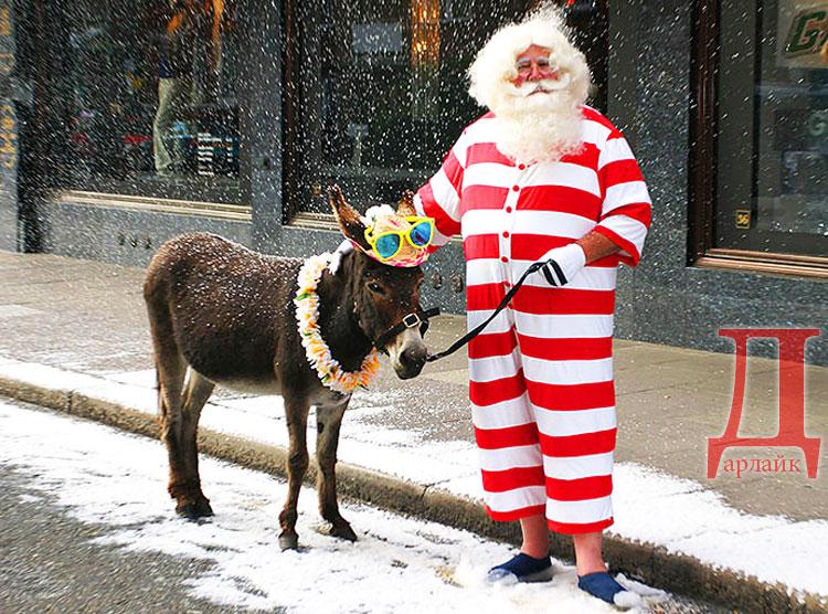 Санта Клаус на осле