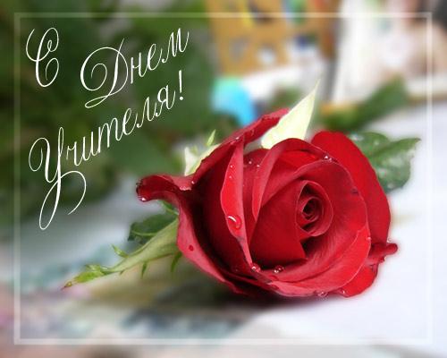 Красивая открытка с розой ко дню учителя